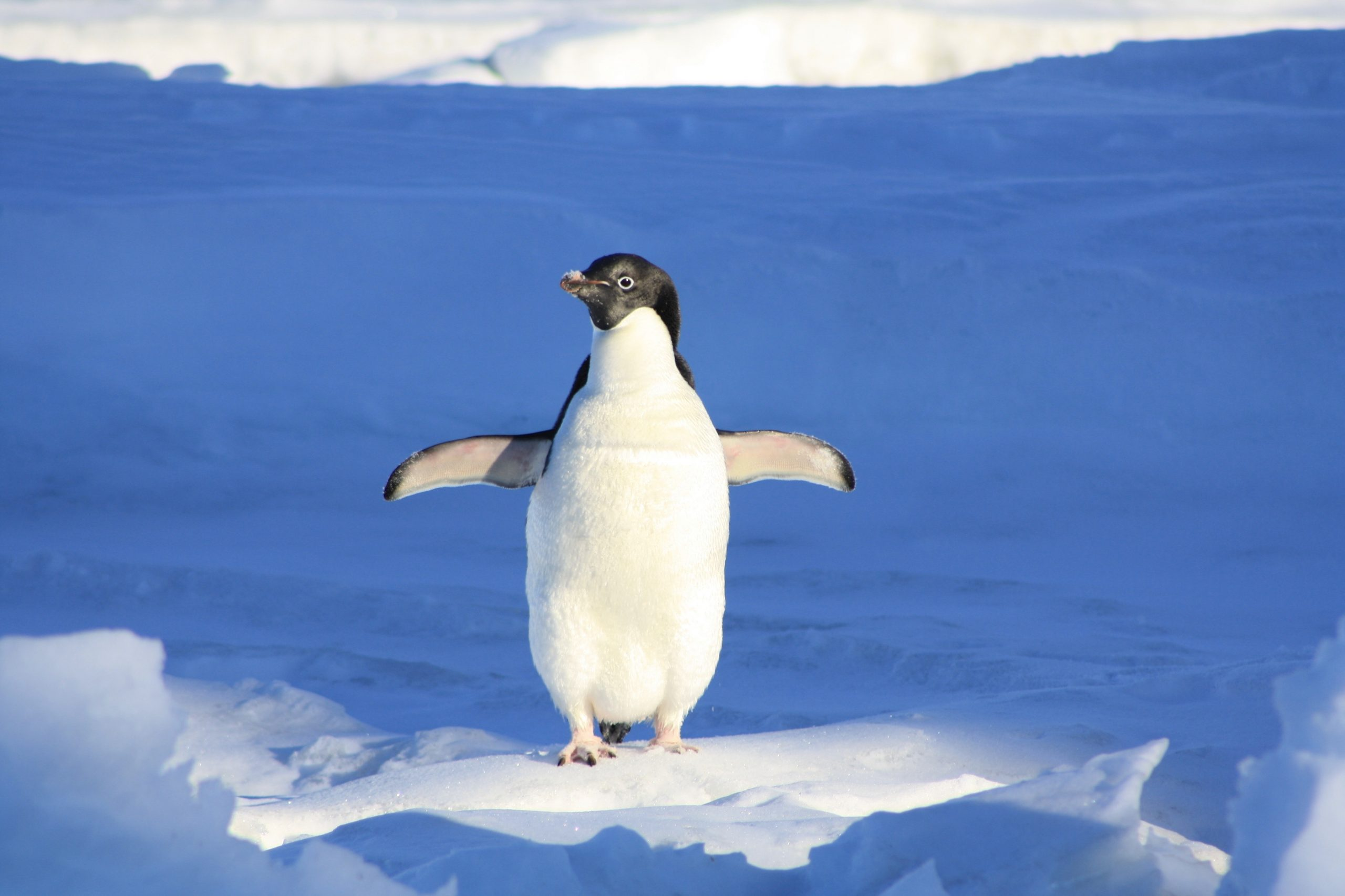 Pinguïncup 2020