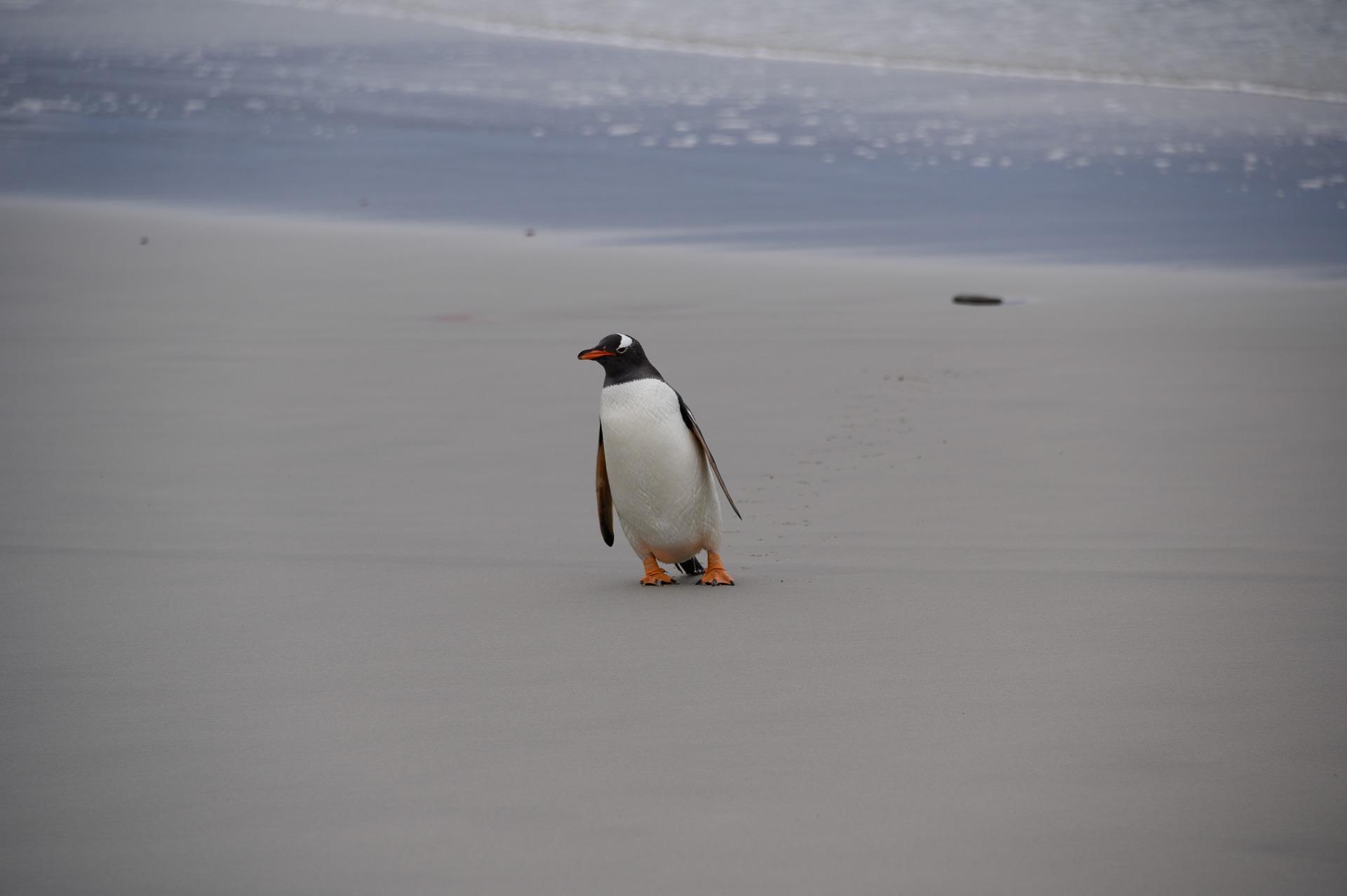 Pinguincup 2021 WSV Almere Haven